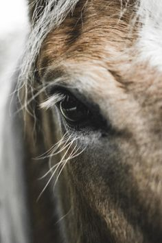 I believe that every horse is beautiful, big or small, quiet or loud, large or…