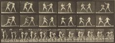 """Animal Locomotion,"" Eadweard J. Muybridge, 1887. Collotype.  J. Paul Getty Museum 