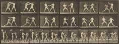 """Animal Locomotion,"" Eadweard J. Muybridge, 1887. Collotype.  J. Paul Getty Museum | Twenty-four views of two men boxing bare-knuckled."