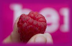 Raspberry-Maxx Biologische frambozenkwekerij Meijel. www.rasberry-maxx.nl