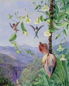 MARIANNE NORTH    article-image