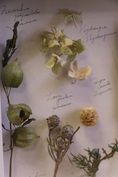 植物標本 ボタニカルフレーム blumen