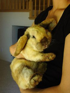 OMG! I want this Bunny!