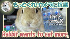 もっとくれ!カメラに抗議【ウサギのだいだい 】 2016年8月5日