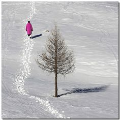 "Naked tree in the snow.    "":O)"