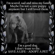 Save a Life! http://theanimalrescuesite.greatergood.com/clickToGive/ars/home