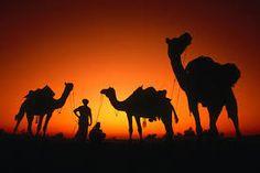 Image result for desert silhouette