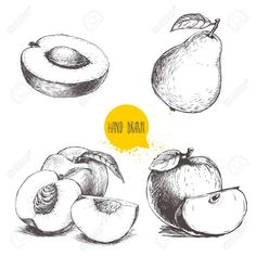 Apricot half with stone, peaches , whole pear, apples. Bio food vector illustration collection on white background. Fruit Sketch, Bio Food, Peach Fruit, Sketch Art, Peaches, Free Photos, Apples, Hand Drawn, Photo Art
