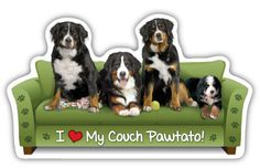 Bernese Couch Pawtato - Magnet