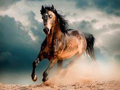 Dragostea de sine e contrariul dragostei | Poze cu cai frumosi