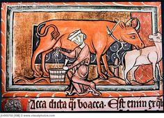 English peasant woman milking 13th c.   MS Bodl.