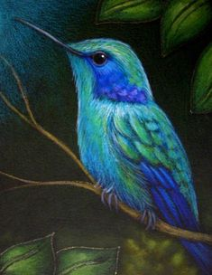Green Violet Ear Hummingbird, Cyra R. Pretty Birds, Beautiful Birds, Hummingbird Painting, Bird Drawings, Watercolor Bird, Chalk Pastels, Pastel Art, Little Birds, Art Portfolio