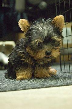 New Tiny Dog