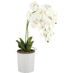 Paper Whites White Orchid in Stone Pot ($69) ❤ liked on Polyvore featuring home, home decor, floral decor, plants, white, white pot, faux floral arrangement, artificial floral arrangement, floral home decor and orchid flower pots