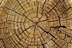 Descargar imagen gratis de los anillos de un tronco de árbol cortado en alta resolución y con derechos libres > http://imagenesgratis.eu/imagen-gratis-de-los-anillos-de-un-tronco-de-arbol-cortado/