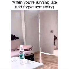 Everytime 😂 - Memes For Eternity. Funny Animal Memes, Funny Animal Videos, Cute Funny Animals, Funny Cute, Funny Dogs, Funny Video Memes, Funny Relatable Memes, Image Hilarante, Gato Animal