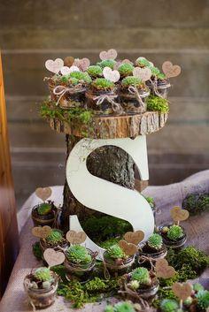 Rustic Potted Succulent Wedding Favors - Studio Phrené