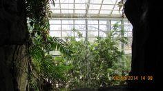 eläintarhan sademetsää