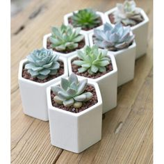 Hexagon Mini Planter Choice Of Succulent Or Cacti - Are you interested in our ceramic indoor PLANTER ? With our SUCCULENT cactus you need look no furth - Succulent Soil, Succulent Terrarium, Indoor Succulent Planter, Terrarium Wedding, Mini Terrarium, Terrarium Ideas, Succulent Containers, Fall Planters, Planter Ideas
