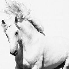 Modern Animals Home Decor on Canvas Wall Art Print Painting Art White Horse H143 | eBay