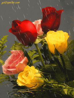 The most beautiful landscape photos animated Roses Gif, Flowers Gif, All Flowers, Flowers Nature, Rose Pictures, Beautiful Pictures, Yellow Roses, Pink Roses, Animated Gifs
