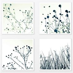 Nature Photography Print Set 8X8 trendy man art Grass Botanical Art Print Black and White Minimalist loft Wall Decor
