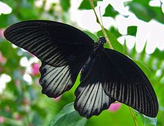 butterfly by The Norwegian, via Flickr