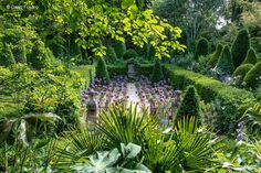 Jardin de Agapanthe, in June, in Grigneuseville, France.  Designed by Landscape Architect, Thomas Alexandre. Photography by Dario Fusaro Source: Garden Design by Carolyn Mullet