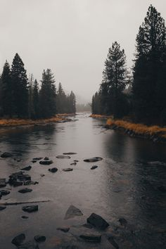 moody payette by brockwayout Autumn Aesthetic, Nature Aesthetic, Dark Photography, Landscape Photography, Dark Paradise, Dark Forest, Nature Wallpaper, Beautiful Landscapes, Aesthetic Pictures