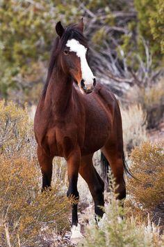 GORGEOUS ! wild horse, Great Desert Basin (Lincoln County), Nevada
