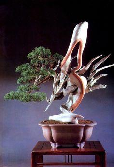 Juniperus chinesis do mestre Masahiro Kimura