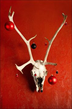 Mounted reindeer skulls would give the perfect atmosphere to a devilish Christmas party.