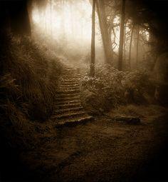 Mt. Davidson Stairway (Holga)