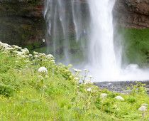 Kids (and adults!) will love the incredible experience of  WALKING BEHIND A BRIDAL VEIL FALLS  in ICELAND.  Seljalandsfoss can be a day trip from Reykjavik and is easily accessible from Iceland's Ring Road.  A natural delight!  Helpful planning details in travel article at http://www.examiner.com/article/unforgettable-seljalandsfoss-iceland-walk-behind-a-bridal-veil-waterfall