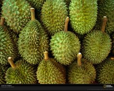 durian fruit |the king of fruits..mainly in South East Asia.