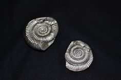 Bronze fossils plated in silver.