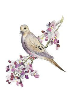 Watercolor Print Mourning Dove Ironwood Flower Blossoms Bird art flowers floral painting by IngsPrettyThings on Etsy