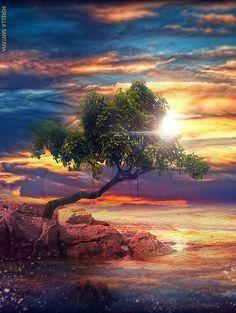Lone tree sunrise ♥ ♥ www.paintingyouwithwords.com