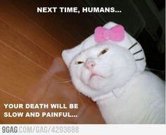 Just wait for my revenge, humans!