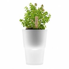 Hydro pots - I want these for my herbs. What a cool idea :)