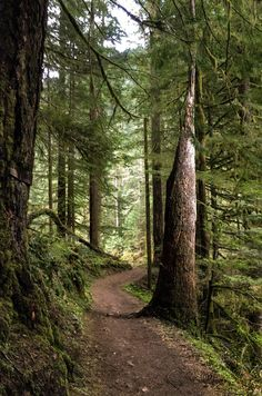 Solo hike on the Eagle Creek Trail to Tunnel Falls (Columbia River Gorge, Oregon) by Wendi Kali