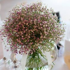 In-Stock and Ships within 24-hours Fast Delivery - Within 5-10 business days 96% reviewers recommend this product 100% Money Back Guarantee Grow your own flowers with these 100 pcs Purple-White Mix Gypsophila Flower Seeds. Each pack contains 100 seeds. Highlights: - Product Type: Bonsai - Size: Small, Medium - Climate: Temperate - Applicable Constellation: Virgo - Style: Annual - Full-bloom Period: Summer - Flowerpot: Excluded - Classification: Novel Plant - Function: Beautifying - Use…