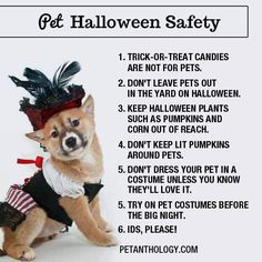 Practice these #Halloween safety tips to make the most out of the day. #pets #halloween