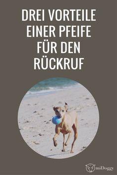 Hunde   Erziehung   Rückruf   Pfeife