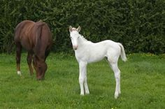 Carmina Burana (1995 ch m Star Way x Benediction, by Day is Done) with her 2006 dominant white Zabeel filly The Opera House (formerly registered as Bluetongue). The filly is a 3/4 sister to champion to Might and Power.