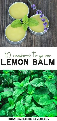 Lemon balm is an awesome herb with numerous benefits! Here are 10 great reasons to grow lemon balm for your garden, your health, and delicious food and drinks! healing herbs on medicinal plants Herbal Remedies, Health Remedies, Natural Remedies, Cold Remedies, Natural Treatments, Healing Herbs, Medicinal Plants, Natural Medicine, Herbal Medicine