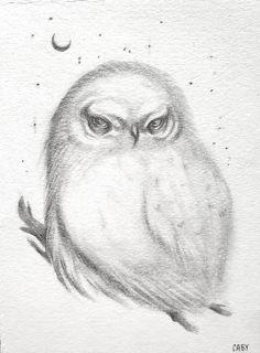 Owl  Original Pencil Drawing