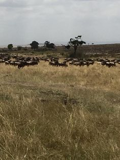 Masai Mara 2015