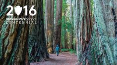 Join us at Redwood National and State Parks to celebrate the National Park Service's Centennial!