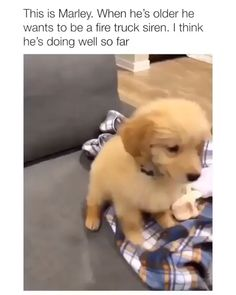 Funny Dogs - Funny Dog Quotes - I think he is really doing well so far. CREDIT: IG The post Funny Dogs appeared first on Gag Dad. Funny Animal Jokes, Funny Dog Memes, Funny Dog Videos, Animal Memes, Funny Riddles, Animal Humor, Cute Funny Dogs, Cute Funny Animals, Cute Animal Videos